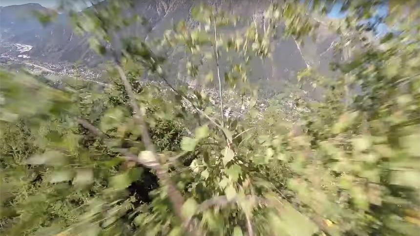 wingsuiter lands in tree